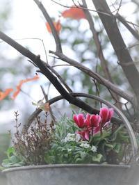 庭に赤の彩が~(*^▽^*) - 自分らしく、ありのままで(^^♪