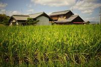 津田(つだ)散歩写真 - 牛の散歩写真・関西版