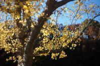 いつのまにか・・・初冬の公園 - 岳の父ちゃんの PhotoBlog