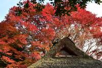 ねこ見に行ったのに居なかった(・・) 金福寺 京都 一乗寺 - marutake-ebisu 京都一景