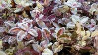 寒い庭 - 今から・花