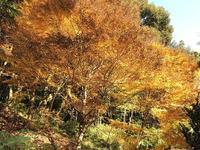 紅葉と色々 - 今日は何処まで
