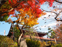 上野動物園 11月29日 - お散歩ふぉと