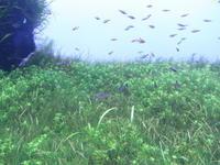 【墨田区】すみだ水族館 - 大和雅子の日々、日常のあれこれ
