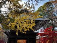 九品仏の紅葉狩り&佐藤智恵「ハーバード日本史教室」 - 梟通信~ホンの戯言