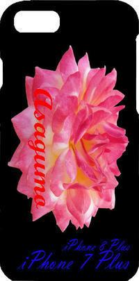 薔薇の写真朝雲iPhone7Plus iPhone8Plus iPhone6Plus - 写真で楽しんでます! スマホ画像!