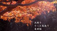 紅葉狩り - 螺子花便り