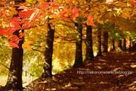 Autumn color - ねこの目天気。