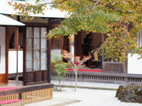 鎌倉 長寿寺の紅葉 - 風任せ自由人