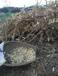 畑仕事~大豆の脱穀 - いねのかみ ~すべては「おかげさま」~