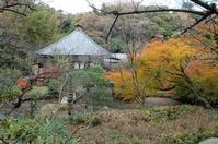 鎌倉・光則寺の紅葉 - pottering