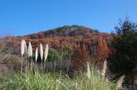 山の麓のハーブ園 - 季節の風を追いかけて