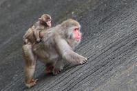 12月4日(月) ぐいぐい - ほのぼの動物写真日記