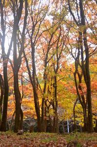 12月の森 - つれづれ日記