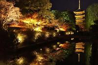 東寺のライトアップ - 思い出 Photo Photo