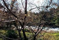 先のことは・・・ - 金沢犀川温泉 川端の湯宿「滝亭」BLOG
