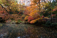 秋の生田緑地へ - 村田淳建築研究室 つれづれ