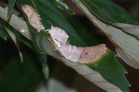 初冬のルーミス - 蝶と蜻蛉の撮影日記