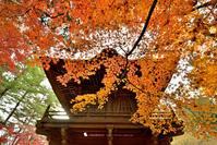 平林寺 - お花びより