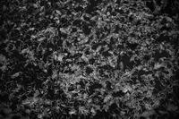 片鱗 #02 - Yoshi-A の写真の楽しみ