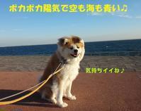 なぜかショック・・・(笑) - もももの部屋(怖がりで攻撃性の高い秋田犬のタイガ、老犬雑種のベスの共同生活&保護活動の記録です・・・時々お空のモカも登場!)