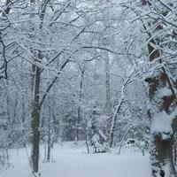 雪景色に - 北緯44度の雑記帳