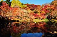 竹田市/用作公園/遅ればせながら紅葉 - ゆっくり、ぱちぱちり