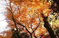 紅葉狩り−4 - 日々のしをり