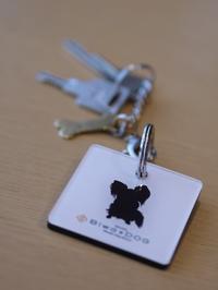 琵琶湖にお出かけ その2♪ HOTEL Biwa DOG - ロビンとルークのスローライフ ~episode2~