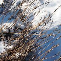 冬のハーブガーデン - sola og planta ハーバリストの作業小屋
