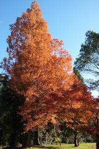 神宮紅葉、博多駅前 - おいさんの休日山歩き日記