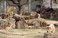 南紀白浜のゴールデンターキンたち - 動物園放浪記