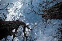 シュールな樹木と空 - 写瞬間