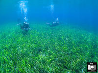 オーストラリアいち美しいビーチって感じの日!! - Esperance Diving