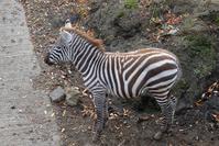 アニマルキングダムで出会ったコ達1 - 動物園に嵌り中