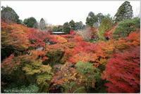 京都古刹の紅葉-2東福寺 - 野鳥の素顔 <野鳥と日々の出来事>