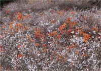 ☆四季桜☆ - 気ままなフォトライフ