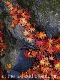 """冬将軍の到来で紅葉は""""最終章"""" - serendipity blog"""