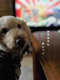 銀ちゃんの毎日 - gin~tetsu~nosuke