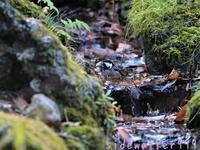 山の水場にて - のんびり行こうよ人生!