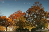 秋の水鏡 - It's only photo