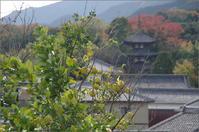 葛城市當麻⑤ - ぶらり記録(写真) 奈良・大阪・・・