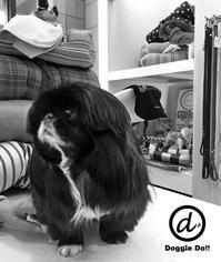 Hello Moku!! - Doggie Do!! / good dog and hello cat !!