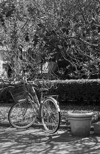 迷子になった自分の影を探す自転車 - Film&Gasoline
