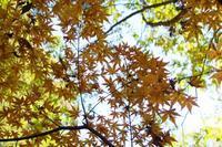 秋の森へ - 写真と音楽
