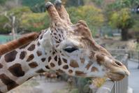 アニマルキングダムで出会ったコ達2 - 動物園に嵌り中