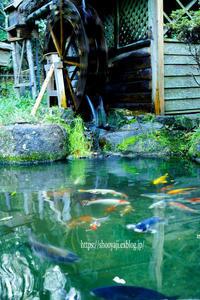 水車と鯉・・・ - ショーオヤジのひとり言