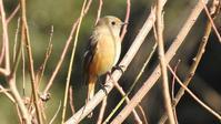 12月野川野鳥観察会 - 山と鳥を愛するアナパパ