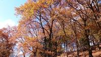 晩秋の七沢森林公園 - 気分にまつわるエトセトラ