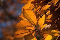 晩秋の雑木林を徘徊する光蜥蜴 - Soul Eyes